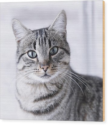 Portrait Gray Tabby Cat Wood Print