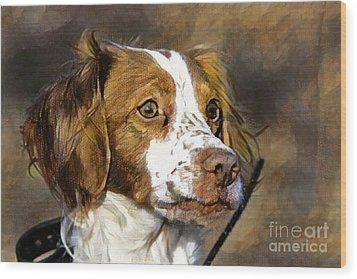 Wood Print featuring the photograph Portrait Of A Brittany - D009983-a by Daniel Dempster