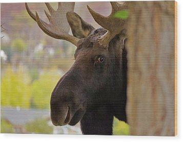 Portrait Of A Bull Moose Wood Print by Matt Helm