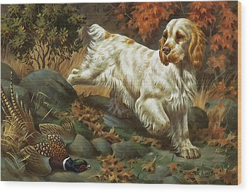 Portrait Of A Clumber Spaniel Hunting Wood Print by Walter A. Weber