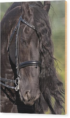 Portrait Of A Friesian Wood Print by Wes and Dotty Weber