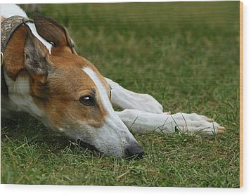 Wood Print featuring the photograph Portrait Of A Greyhound - Soulful by Angela Rath