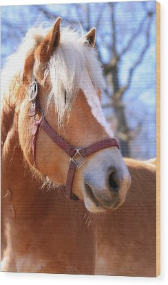 Wood Print featuring the photograph Portrait Of A Haflinger - Niko by Angela Rath