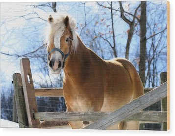 Wood Print featuring the photograph Portrait Of A Haflinger - Niko In Winter by Angela Rath