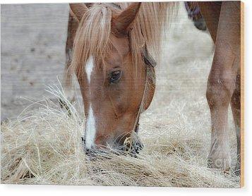 Portrait Of A Horse Wood Print by Brenda Bostic