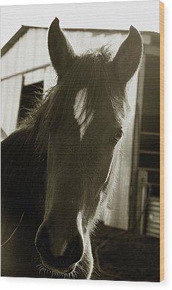 Portrait Of A Horse Wood Print by Toni Hopper