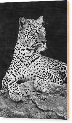 Portrait Of A Leopard Wood Print by Richard Garvey-Williams