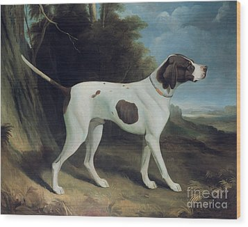 Portrait Of A Liver And White Pointer Wood Print by George Garrard