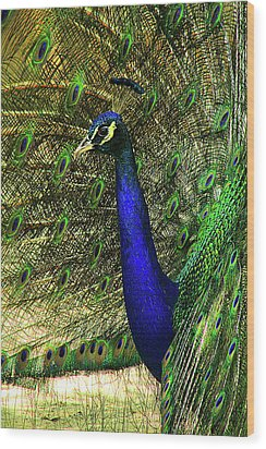 Wood Print featuring the photograph Portrait Of A Peacock by Jessica Brawley