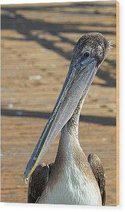 Portrait Of A Pelican On The Pier Wood Print