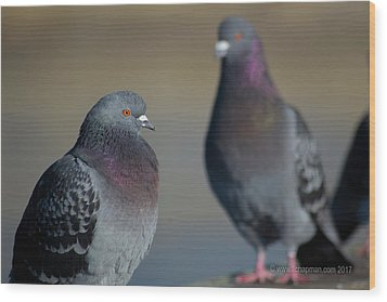 Wood Print featuring the photograph Portrait Of A Pigeon by Lora Lee Chapman