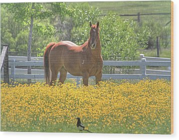Portrait Of A Quarter Horse Wood Print by Donna Kennedy