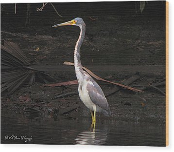 Wood Print featuring the photograph Portrait Of A Tri-colored Heron by Barbara Bowen