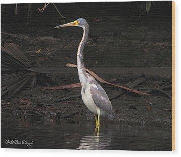 Portrait Of A Tri-colored Heron Wood Print by Barbara Bowen