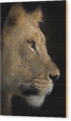 Wood Print featuring the digital art Portrait Of A Young Lion by Ernie Echols