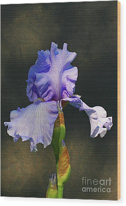 Portrait Of An Iris Wood Print by Steve Augustin