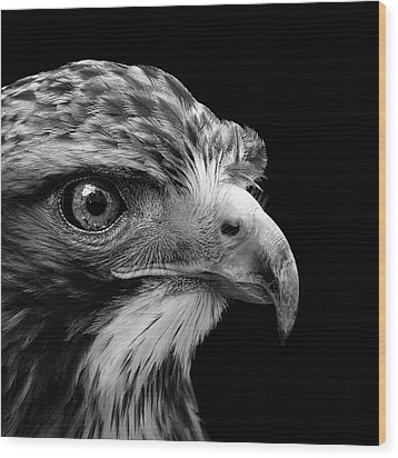 Portrait Of Common Buzzard In Black And White Wood Print by Lukas Holas