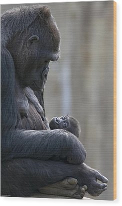 Portrait Of Gorilla Mother Looking Wood Print by Karine Aigner
