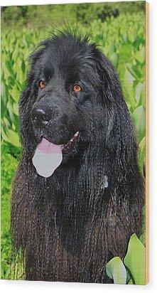Portrait Of Sierra Wood Print