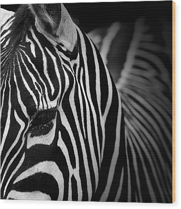 Portrait Of Zebra In Black And White V Wood Print