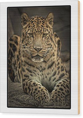 Wood Print featuring the photograph Poser by Cheri McEachin