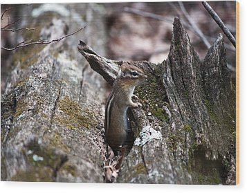 Wood Print featuring the photograph Posing #2 by Jeff Severson