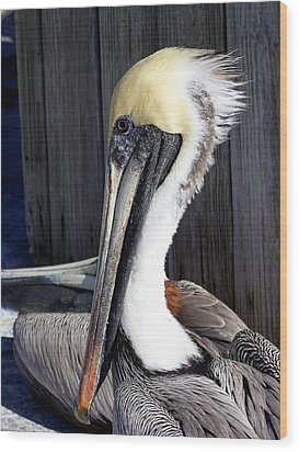 Posing For Pelican Pictures Wood Print