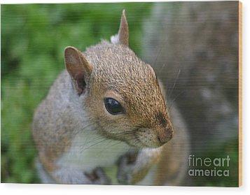 Posing Squirrel 3 Wood Print by David Bishop