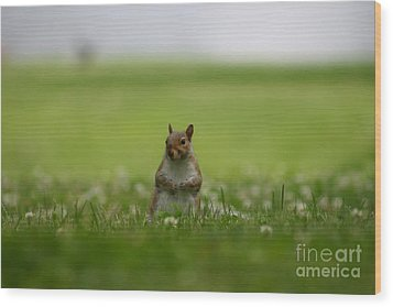Posing Squirrel Wood Print