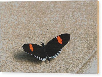 Postman Butterfly Wood Print