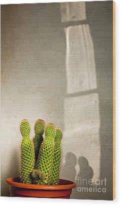 Pot Of Cactus Wood Print by Emilio Lovisa
