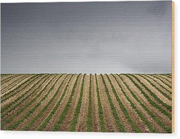 Potato Field Wood Print by John Short