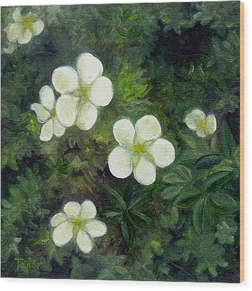Potentilla Wood Print by FT McKinstry