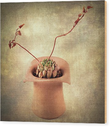 Potted Succulent Wood Print by Catherine Lau