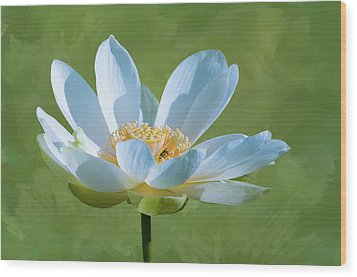 Power Of A Lotus Wood Print by Carolyn Dalessandro