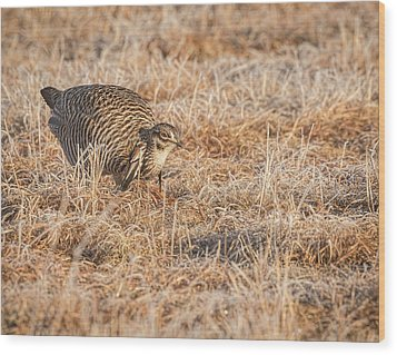 Wood Print featuring the photograph Prairie Chicken 11-2015 by Thomas Young