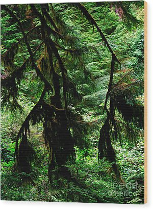 Prairie Creek Redwoods State Park 12 Wood Print by Terry Elniski