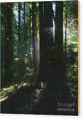 Prairie Creek Redwoods State Park 6 Wood Print by Terry Elniski