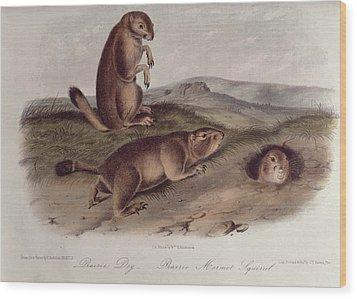 Prairie Dog Wood Print by John James Audubon