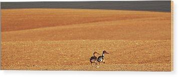 Prairie Storm And Ducks Canada Wood Print by Mark Duffy