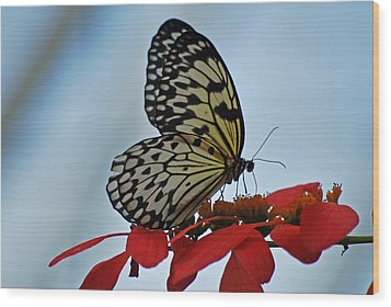 Praying Butterfly Wood Print