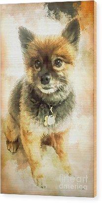 Precious Pomeranian Wood Print