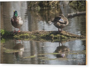 Wood Print featuring the photograph Preening Ducks by David Bearden