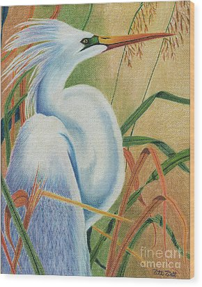 Wood Print featuring the drawing Preening Egret by Peter Piatt