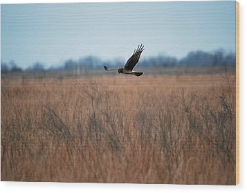 Wood Print featuring the photograph Prepare For Landing by Teresa Blanton
