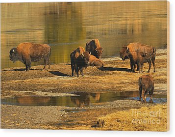 Wood Print featuring the photograph Preparing To Cross The Yellowstone River by Adam Jewell