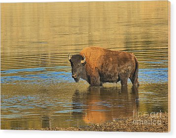 Wood Print featuring the photograph Preparing To Swim The Yellowstone by Adam Jewell