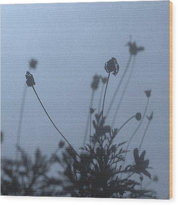 Pressed Daisy Bush Blue Wood Print