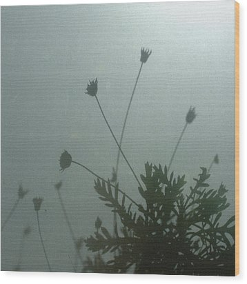 Pressed Daisy Bush Green Wood Print by Stan Magnan