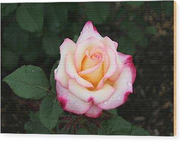 Pretty Bloom Wood Print by Gerald Mitchell